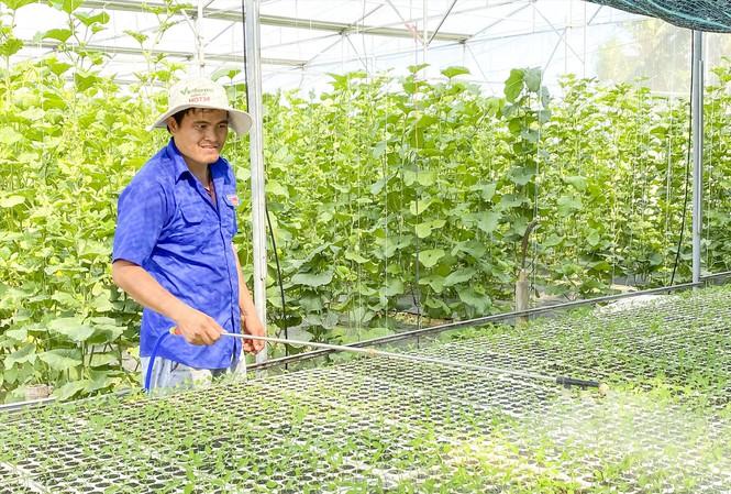 Làm giàu từ mô hình trồng dưa lưới sạch